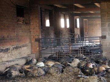 Animales abrasados en una granja de la Torre de l'Espanyol, Tarragona