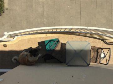 Un perro y un gato abandonados en un balcón de Blanes