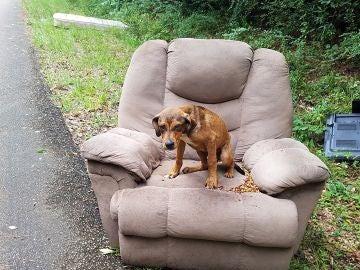 Un perro abandonado en medio de la carretera espera durante días a sus dueños.