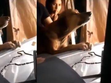 Perro llorando en el ataúd de su dueño