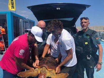 La tortuga fue encontrada enredada en redes de pesca y plástico