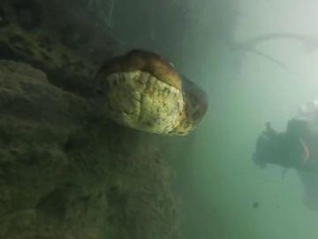 El encuentro de dos buceadores con una anaconda