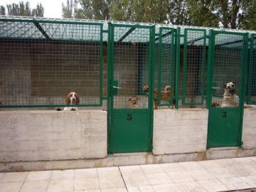 Imagen de archivo del Centro de Atención a Animales de Pamplona.