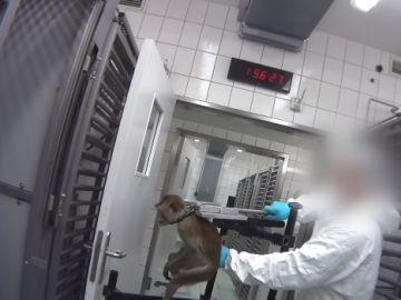 Imagen del vídeo en el que se puede observar el maltrato que sufren los animales