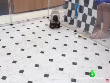 Las ratas son capaces de aprender a conducir con tal de conseguir comida