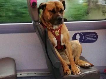 Imagen de la perra sola en un autobús de Reino Unido tras ser abandonada