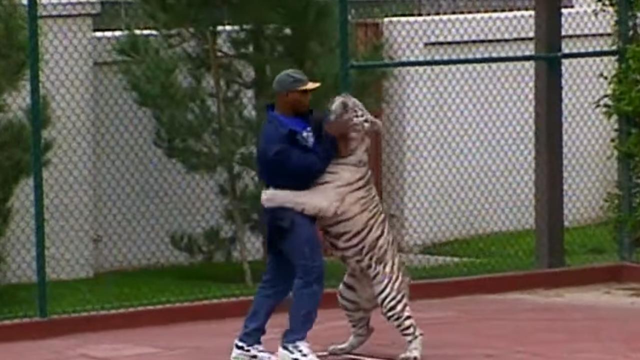 Mike Tyson y su tigre Kenia
