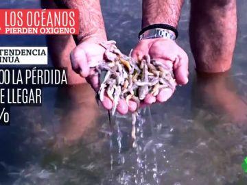 Los principales pulmones del planeta, amenazados: los océanos han perdido un 2% del oxígeno en sólo 50 años