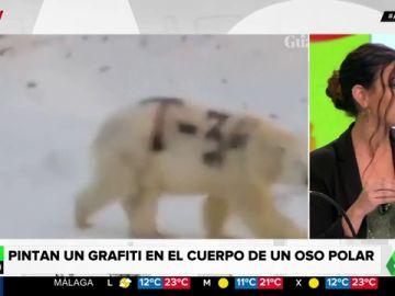 Por qué el grafiti pintado en un oso polar supone una condena a muerte para el animal