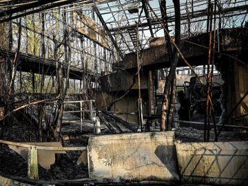 Daños ocasionados por el incendio en el zoo de Krefeld de Alemania