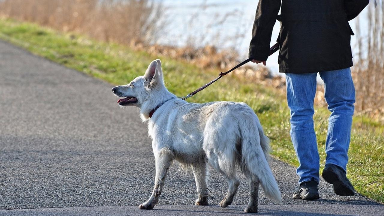 Imagen de archivo de una persona paseando a su perro
