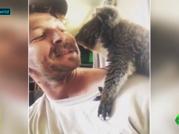 Kailas Wild, el escalador que rescata koalas en los incendios de Australia