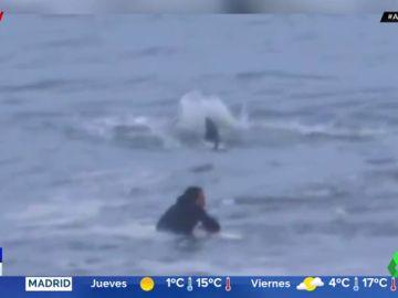 Las escalofriantes imágenes de un surfista esperando una ola sin darse cuenta de que hay un tiburón martillo justo a su lado
