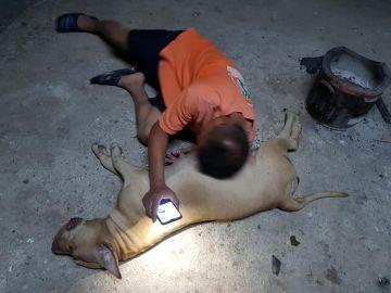 Una perra embarazada de 10 cachorros salva a sus dueños del ataque de una cobra