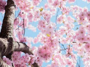 Equinoccio de primavera: ¿qué es y cuándo tendrá lugar?