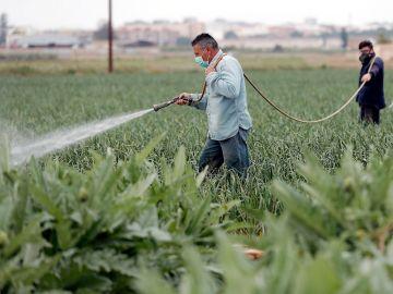Imagen de archivo de trabajadores en el campo