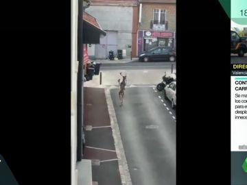 Ciervos paseando por las calles de París en pleno confinamiento por el coronavirus