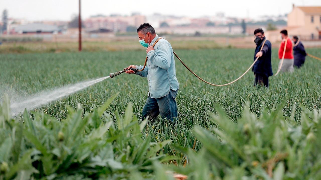 Agricultores durante la pandemia