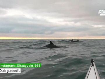 Delfines junto a un piragüista