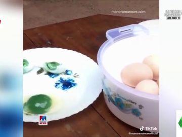Esto es lo que hay detrás de las gallinas de los huevos con yemas de color verde