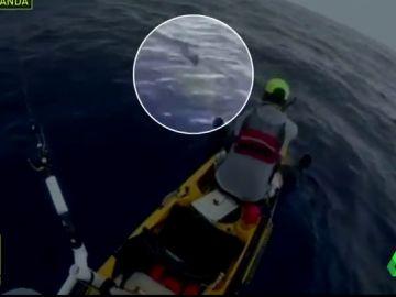 Tiburón Jugones