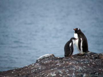 El impacto del ser humano en la Antártida es mucho peor de los que se esperaba.