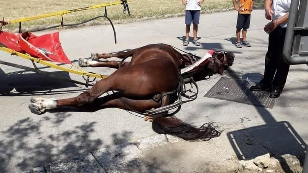El caballo fallecido en Caserta, Italia