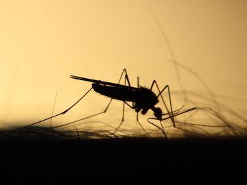 Hay dos víctimas mortal por la fiebre del virus del Nilo