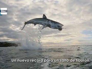 Salto de tiburón blanco