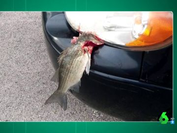 Inquietante imagen: ¿qué hay detrás de la foto de este pez muerto en el capó de un coche?