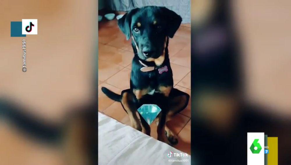 Los mejores vídeos de perros en Tik Tok