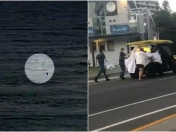 Ataque de un tiburón blanco en Australia