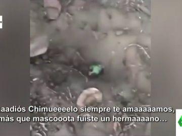 """El vídeo viral de Chimuelo, el loro muerto al que muerde un perro: """"Adios Chimuelo, más que mascota, fuiste un hermano"""""""