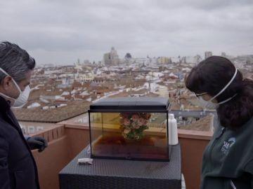 """El experimento que simula la boina de contaminación de Madrid y sus consecuencias para los gorriones: """"Nos están avisando"""""""