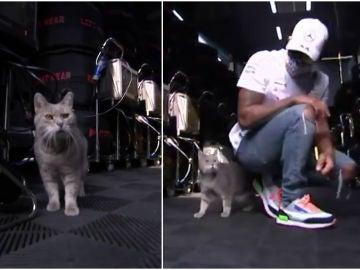 El 'gato de Imola' visita el garaje de Mercedes