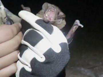 La razón por la que se evita la manipulación de murciélagos (y sí, tiene que ver con el coronavirus pero no como pensabas)