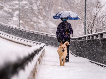 Una persona pasea con su perro bajo la nieve