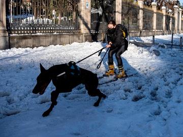 Una persona es arrastrada por un perro en la calle Alcalá de Madrid, este domingo