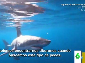 """El asombroso vídeo de un tiburón blanco rondando la barca de un grupo de jóvenes en Estados Unidos: """""""