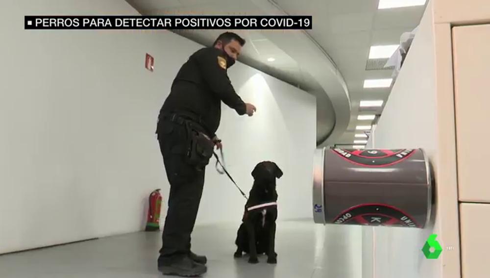 perros olor COVID