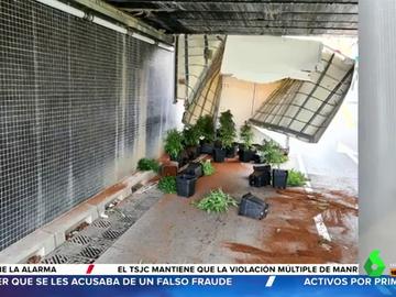 Detenido tras tener un accidente con un camión cargado de plantas de marihuana en Gavà (Barcelona)