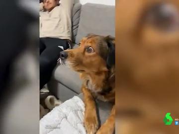 La reacción de un perro al ver un documental sobre ardillas en la televisión