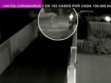 Las impactantes imágenes del secuestro de los perros de Lady Gaga a punta de pistola