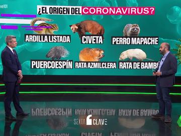 Del puercospín al tejón: los animales que podrían haber sido el puente del coronavirus del murciélago al ser humano