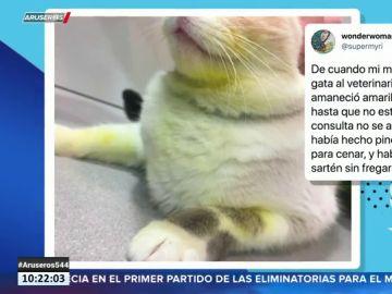 Lleva a su gata al veterinario porque tiene manchas amarillas y descubre que se ha ensuciado con una sartén