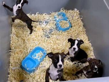 Detenidos cinco miembros de una red que vendía cachorros de perro enfermos en Toledo