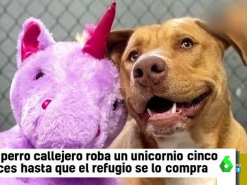 Un perro callejero roba cinco veces un peluche de unicornio hasta que consigue que un refugio se lo compre