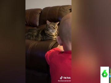El divertido gesto de desprecio de un gato a un bebé cuando trataba de jugar con él