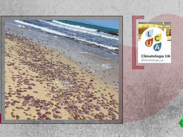 Invasión de medusas en las costas mediterráneas españolas