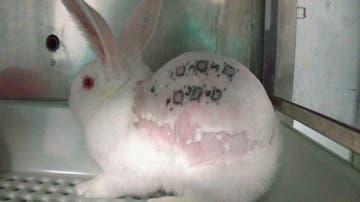 Imagen cedida del supuesto maltrato animal en un laboratorio de investigación de Madrid.
